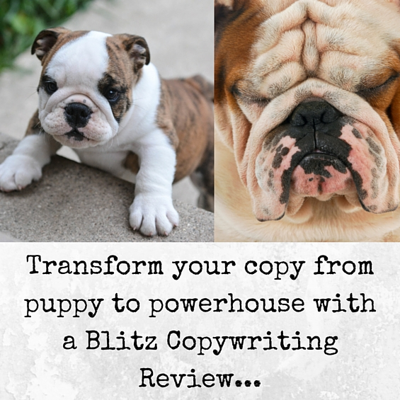 Transform your copy from puppy to powerhouse